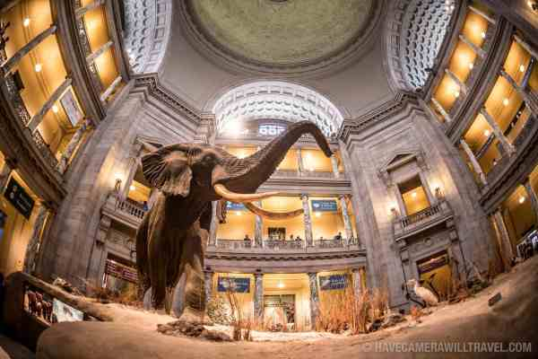 Smithsonian Museum Of Natural History Washington Dc