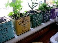 herb windowsill garden - Decoist