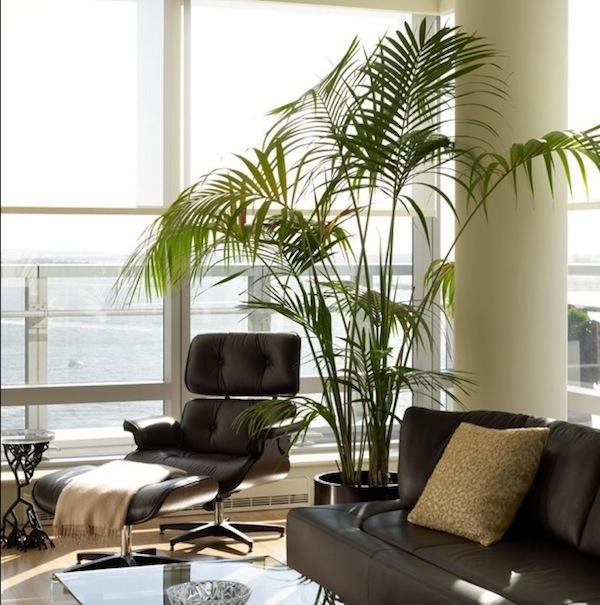 Wohnzimmer Jungle