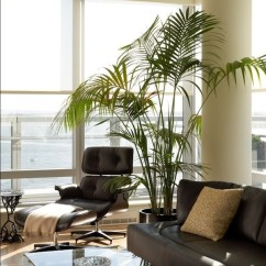 Living Room Plant Decor Diy Small Apartment 10 Beautiful Indoor House Plants Ideas View In Gallery Home Interiors Sitting Area