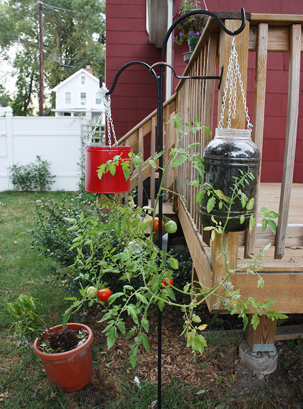 Home Gardening In Unusual Spaces