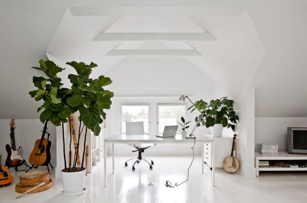 feng shui plants for office. 10 feng shui tips for a happy and harmonious home plants office