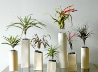 Air plants in ceramic containers - Decoist