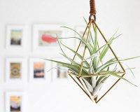 5 Unique Ways To Display Air Plants