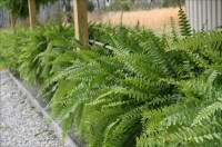 The Best Outdoor Plants For Shaded Areas