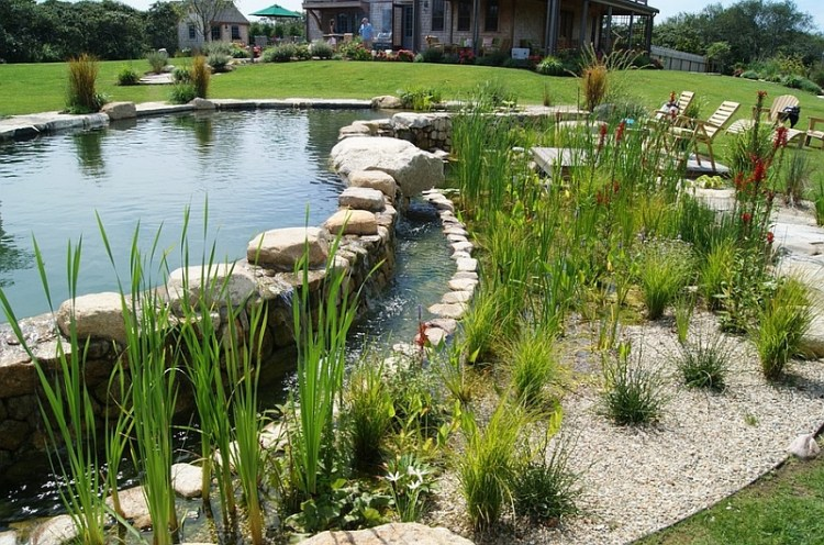 Give your natural pool a tropical flavor
