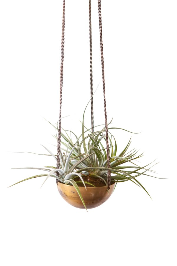 How To Display Air Plants In Hanging Containers