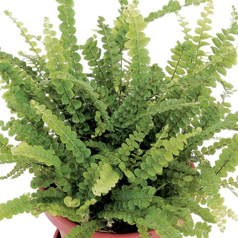 Ideal Plants Hanging Baskets