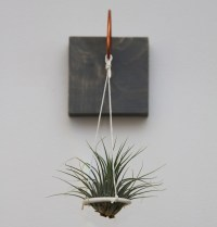 Where To Buy Air Plants Online