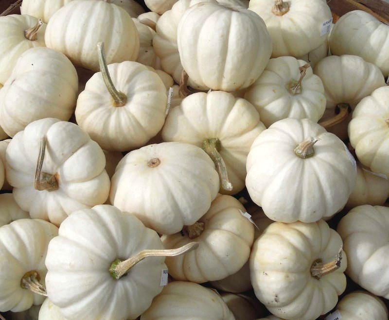 Fall White Pumpkins Wallpaper Host A Chic Fall Dinner Party