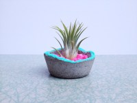 The Top Trends In Modern Air Plant Containers