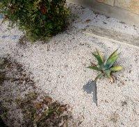 How to Maintain a Gravel Garden
