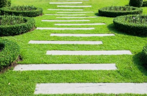 maintain green grass