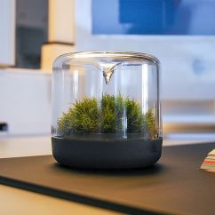 Coffee Table Living Room Design Furniture Designs In India Sanctuary: Little Mossarium Brings A Slice Of Natural ...