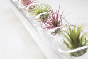 Air Plant Centerpiece Glass Blown Tube Plants
