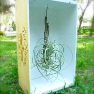 Air Plant Display Wine Crate Craft Organic