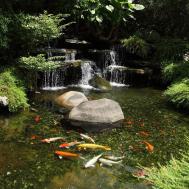 Albany Plattsburgh Burlington Outdoor Water Gardens