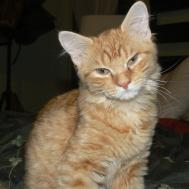 Alley Cats Angels Weekend Adoption Events