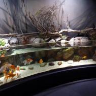 Amazing Aquarium Home Design Futuristic Loversiq