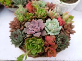 Benefits Growing Succulents Indoors Maintenance Tips