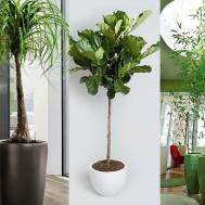 Best Indoor Large Plants Interior Design Ideas
