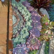 Best Succulent Garden Ideas 2016