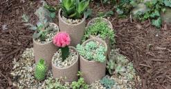 Build Plant Succulent Garden Hometalk