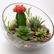 Create Care Your Stunning Succulent