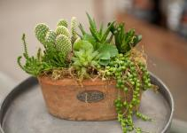 Create Rustic Succulent Planter Garden House Home