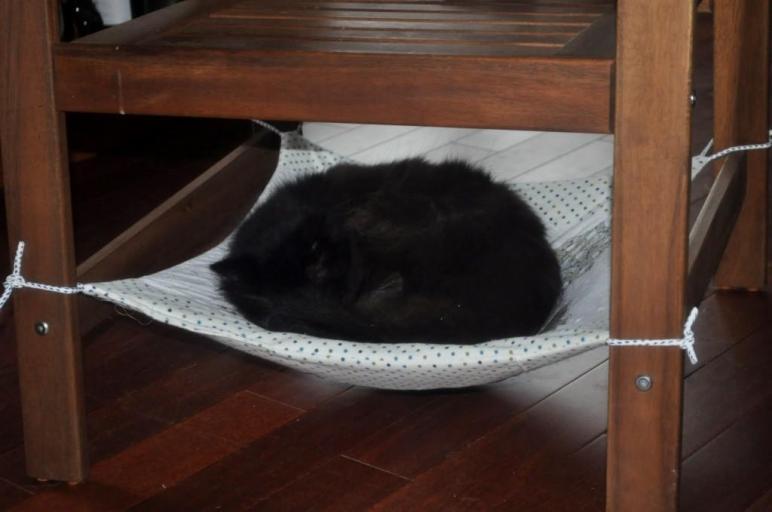Diy Cat Chair Hammock Petdiys