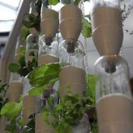 Diy Indoor Herb Garden Ideas Plants Expert