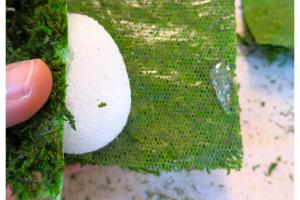 Diy Moss Covered Eggs Bees Pod