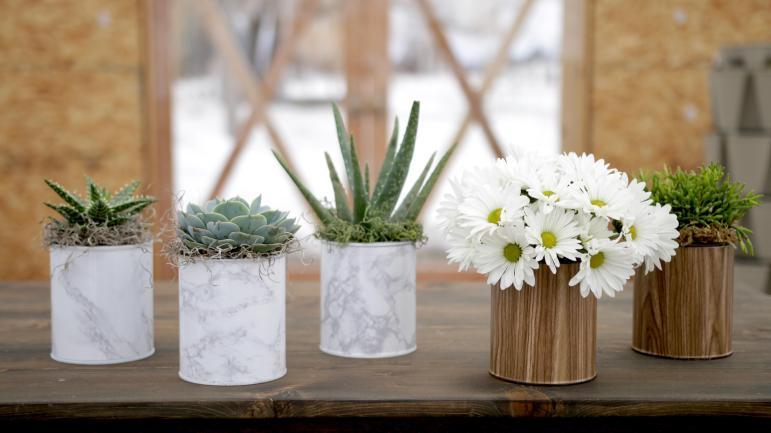 Diy Paint Can Planter Succulents Espoma