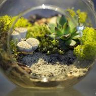 Diy Self Sustaining Terrariums Home