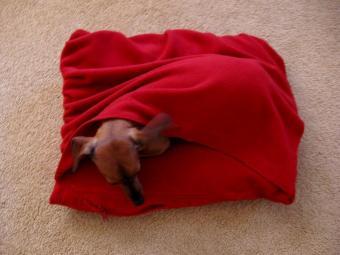 Diy Snuggle Dog Bed Petdiys