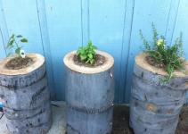 Diy Stump Planters Decor Hacks