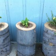 Diy Stump Planters Decor Hacks