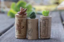 Diy Succulent Wine Cork Planters Yourself Projects