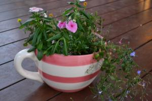 Diy Tea Cup Plant Pot Train Your Imagination