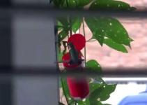 Easy Diy Hummingbird Feeder