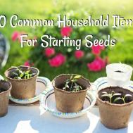 Easy Diy Seed Starters Common Household Items