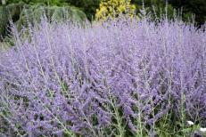 Easy Plants Low Maintenance Garden Raise Your