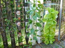 Farming Gardening Bottle Towers Pot
