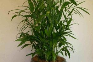 Fresh Beautiful Indoor Plant Ideas Eco Friendly