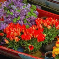 Fresh Ideas Have Vibrant Bright Blooming Spring