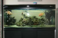 Fresh Luxury Large Fish Tanks Ideas Yustusa