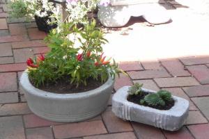 Garden Diy Concrete Planters Cotcozy