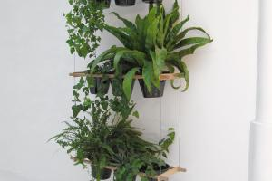 Great Ideas Display Houseplants Indoor Plants