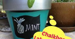 House Plant Ideas Idea Box Justawhimsicalworld Hometalk
