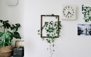 Ideas Decorating Every Room Indoor Plants